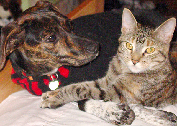 a dog and a cat sitting by each other